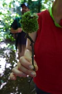 A tricksy Twiglet